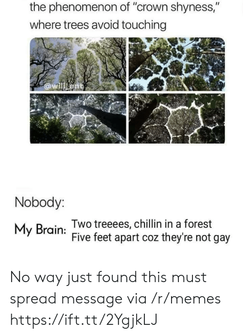 """Memes, Brain, and Trees: the phenomenon of """"crown shyness,""""  where trees avoid touching  @willent  Nobody:  Two treeees, chillin in a forest  Five feet apart coz they're not gay  My Brain No way just found this must spread message via /r/memes https://ift.tt/2YgjkLJ"""