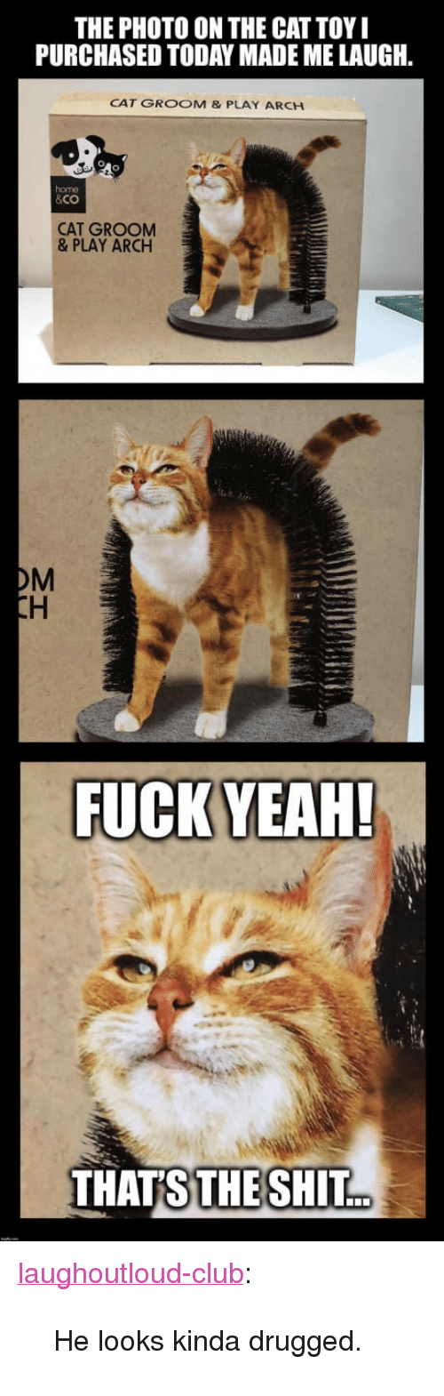 "Club, Shit, and Tumblr: THE PHOTO ON THE CAT TOY  PURCHASED TODAY MADE ME LAUGH  CAT GROOM & PLAY ARCH  home  &Co  CAT GROOM  & PLAY ARCH  OM  THATS  THE SHIT. <p><a href=""http://laughoutloud-club.tumblr.com/post/169556883628/he-looks-kinda-drugged"" class=""tumblr_blog"">laughoutloud-club</a>:</p>  <blockquote><p>He looks kinda drugged.</p></blockquote>"