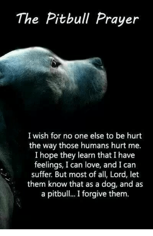 The Pitbull Prayer I Wish for No One Else to Be Hurt the Way