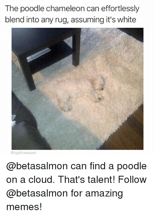 Memes, Chameleon, and Cloud: The poodle chameleon can effortlessly  blend into any rug, assuming it's white  @highfiveexpert @betasalmon can find a poodle on a cloud. That's talent! Follow @betasalmon for amazing memes!