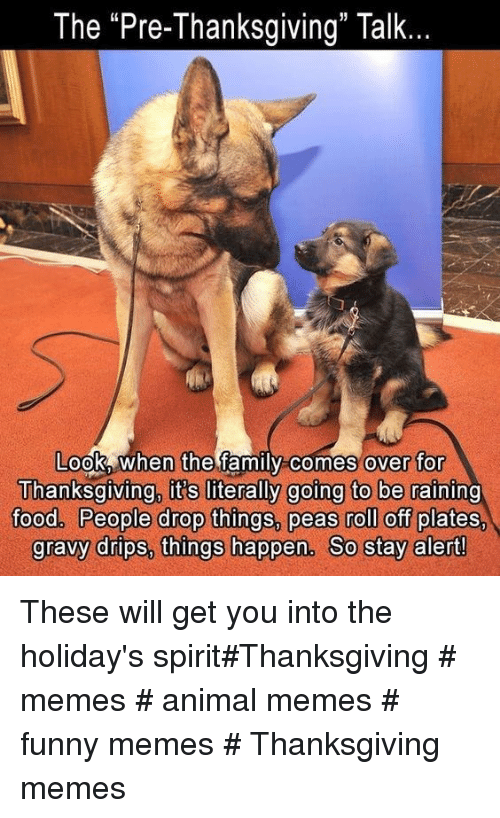 """Funny, Memes, and Thanksgiving: The """"Pre-Thanksgiving"""" Talk  Look When the famIl-comes  over for  Thanksgiving it's literally going to be raining  0o0 People drop thinas. peas roll off plate  gravv drips, thinas happen. Co stav alert These will get you into the holiday's spirit#Thanksgiving # memes # animal memes # funny memes # Thanksgiving memes"""