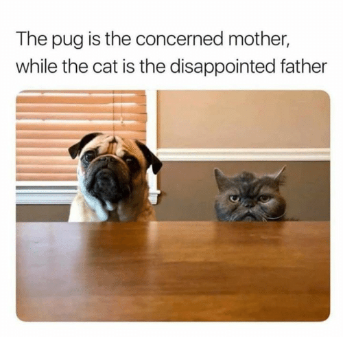 Disappointed, Cat, and Mother: The pug is the concerned mother,  while the cat is the disappointed father