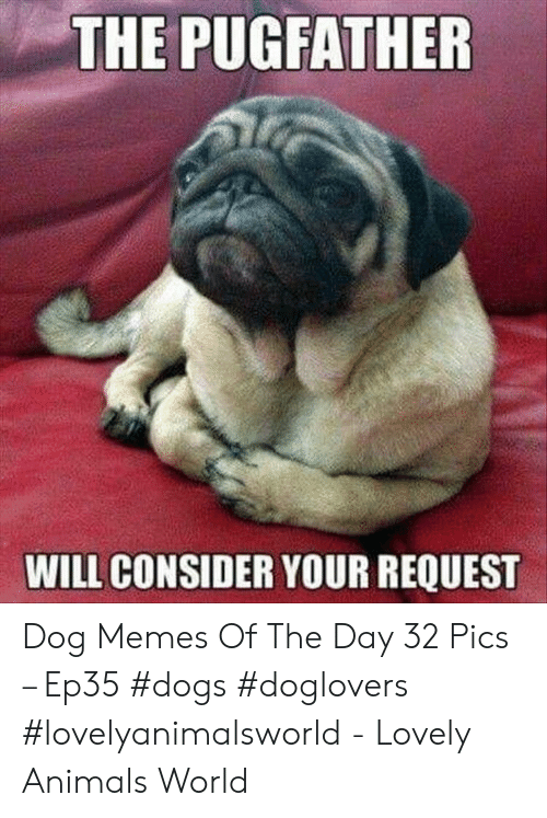 Animals, Dogs, and Memes: THE PUGFATHER  WILL CONSIDER YOUR REQUEST Dog Memes Of The Day 32 Pics – Ep35 #dogs #doglovers #lovelyanimalsworld - Lovely Animals World