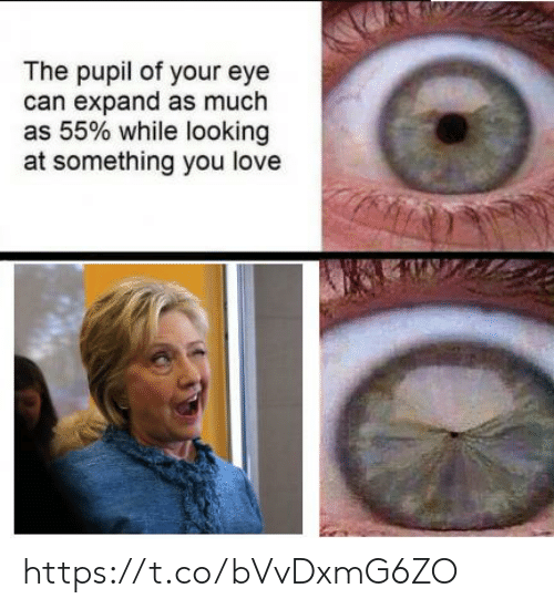 Love, Eye, and Looking: The pupil of your eye  can expand as much  as 55% while looking  at something you love https://t.co/bVvDxmG6ZO