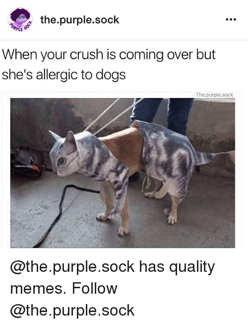 Crush, Dogs, and Memes: the purple sock  PLE  When your crush is coming over but  she's allergic to dogs  The purple.sock @the.purple.sock has quality memes. Follow @the.purple.sock