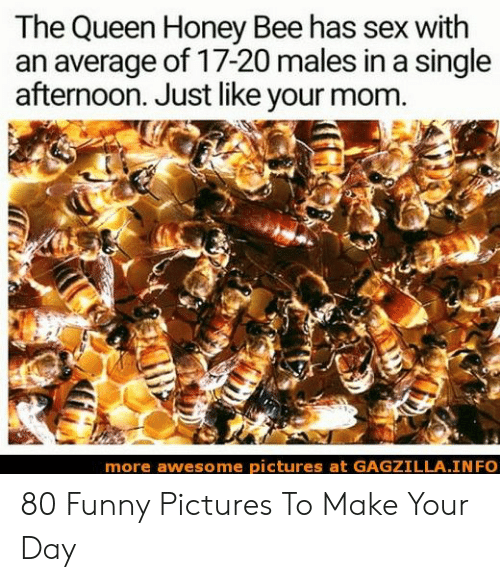 Funny, Sex, and Queen: The Queen Honey Bee has sex with  an average of 17-20 males in a single  afternoon. Just like your mom  more awesome pictures at GAGZILLA.INFO 80 Funny Pictures To Make Your Day