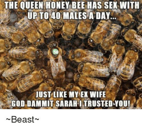 Ex's, Memes, and Queen: THE QUEEN HONEY BEE HAS SEX WITH  UP TO 40 MALES A DAY  JUST LIKE MY EX WIFE  GOD DAMMIT SARAHITRUSTEDYOU! ~Beast~