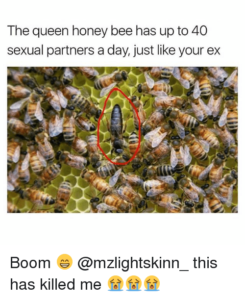 Memes, Queen, and Boom: The queen honey bee has up to 40  sexual partners a day, just like your ex Boom 😁 @mzlightskinn_ this has killed me 😭😭😭