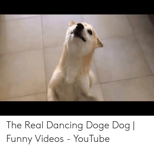 The Real Dancing Doge Dog Funny Videos Youtube Dancing Meme