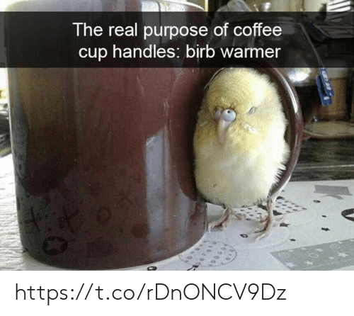 Memes, Coffee, and The Real: The real purpose of coffee  cup handles: birb warmer https://t.co/rDnONCV9Dz