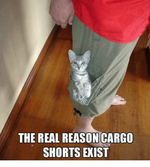 Memes, 🤖, and Existence: THE REAL REASON CARGO  SHORTS EXIST