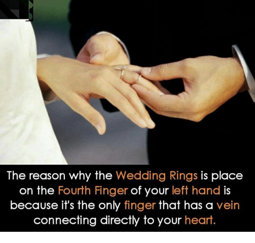 The Reason Why the Wedding Rings Is Place on the Fourth Finger of