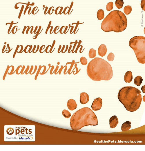 Memes, The Road, and 🤖: The road  my heait  paved with  Healthy  With Dr. Karen Becker  presented by Mercola  Healthy Pets Mercola.com