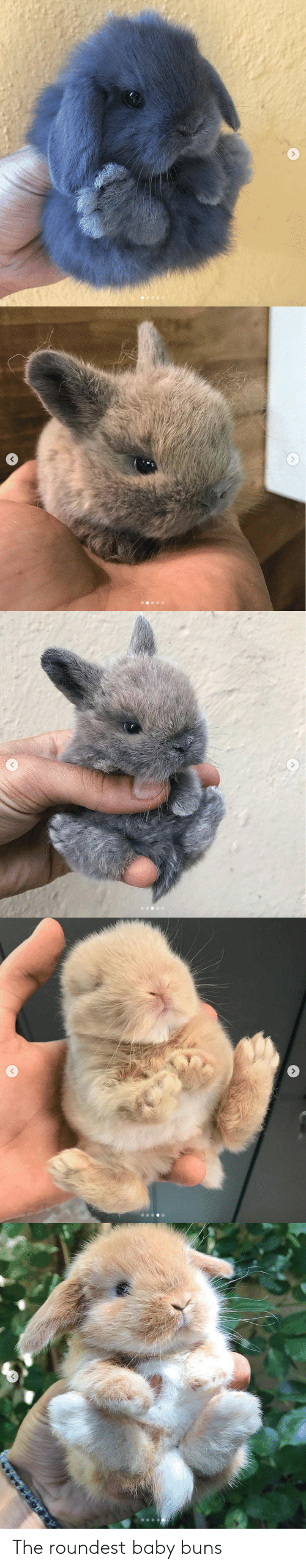 Baby, Buns, and The: The roundest baby buns