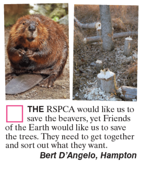 Friends, Memes, and Earth: THE RSPCA would like us to  save the beavers, yet Friends  the trees. They need to get together  Bert D'Angelo, Hampton  of the Earth would like us to save  and sort out what they want.