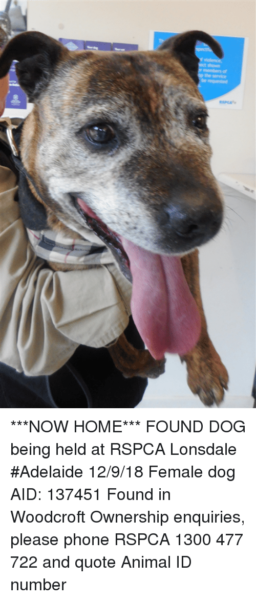 The Service Requested ***NOW HOME*** FOUND DOG Being Held at