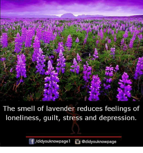 Memes, Smell, and Depression: The smell of lavender reduces feelings of  loneliness, guilt, stress and depression  /didyouknowpage  @didyouknowpage