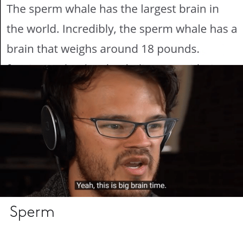 Yeah, Brain, and Time: The sperm whale has the largest brain in  the world. Incredibly, the sperm whale has a  brain that weighs around 18 pounds.  Yeah, this is big brain time. Sperm