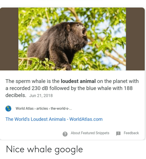 Animals, Facepalm, and Google: The sperm whale is the loudest animal on the planet with  a recorded 230 dB followed by the blue whale with 188  decibels. Jun 21, 2018  World Atlas articles the-world-s...  The World's Loudest Animals - WorldAtlas.com  About Featured Snippets  Feedback Nice whale google