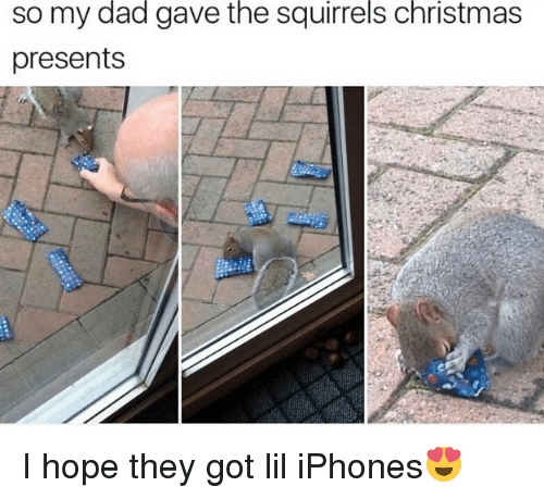 Christmas, Dad, and Funny: the  squirrels  christmas  so my dad gave  presents I hope they got lil iPhones😍
