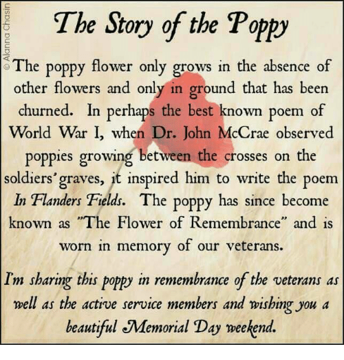 The story of the poppy e poppy flower only grows in the absence of beautiful memes and soldiers the story of the poppy e poppy flower only mightylinksfo