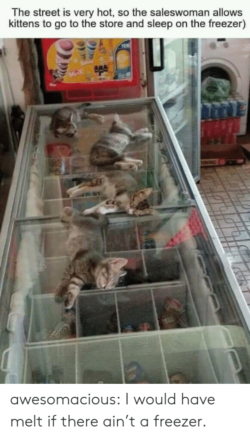 Tumblr, Blog, and Kittens: The street is very hot, so the saleswoman allows  kittens to go to the store and sleep on the freezer)  YEN awesomacious:  I would have melt if there ain't a freezer.