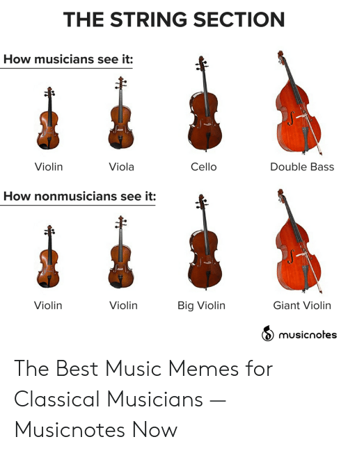 The String Section How Musicians See It Double Bass Cello