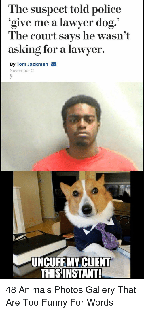 Animals, Funny, and Lawyer: The suspect told police  'give me a lawyer dog.  'give me a lawyer  The court says he wasn't  asking for a lawyer.  By Tom Jackman  November 2  UNCUFFMY CLIENT  THISINSTANT! 48 Animals Photos Gallery That Are Too Funny For Words