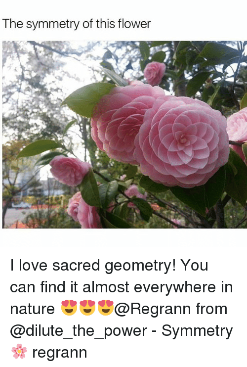 The Symmetry of This Flower I Love Sacred Geometry! You Can