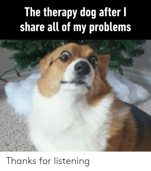 Dank, 🤖, and Dog: The therapy dog after l  share all of my problems Thanks for listening
