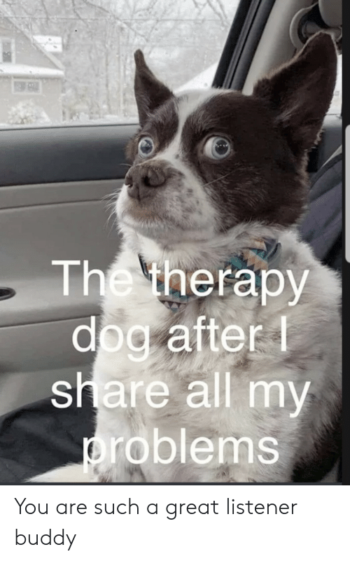Dog, Listener, and All: The therapy  dog after  share all my  problems You are such a great listener buddy