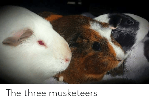 Three Musketeers, Three, and Musketeers: The three musketeers