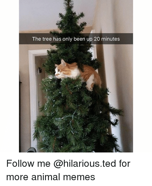 Funny, Memes, and Ted: The tree has only been up 20 minutes Follow me @hilarious.ted for more animal memes