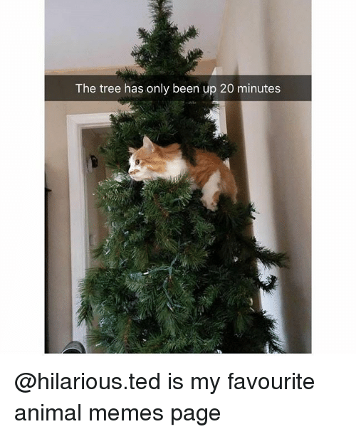 Memes, Ted, and Animal: The tree has only been up 20 minutes @hilarious.ted is my favourite animal memes page