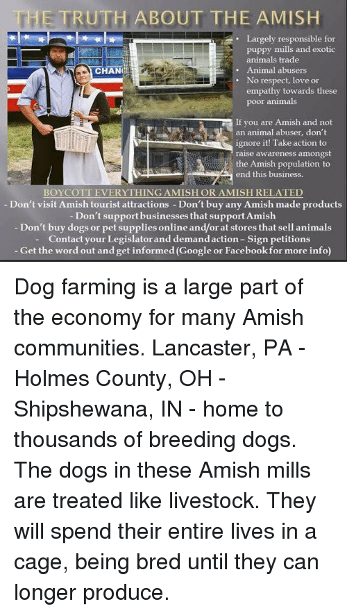 The TRUTH ABOUT T HE AMISH Largely Responsible for Puppy