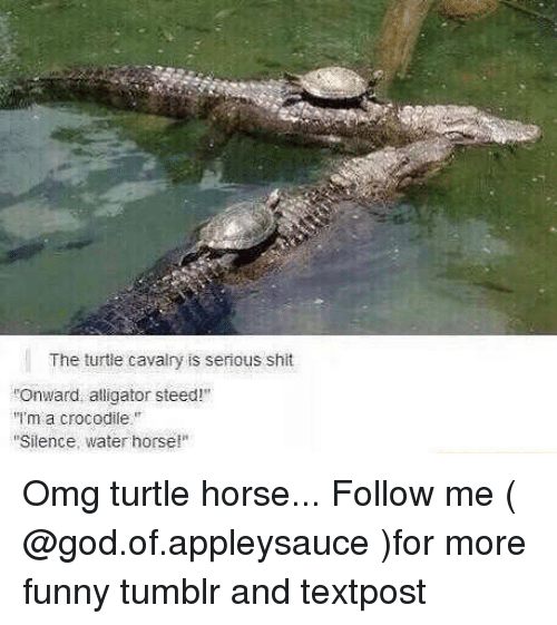 the turtle cavalry is serious shit onward alligator steed ima 25871017 25 best alligator memes shinies memes, never give up memes