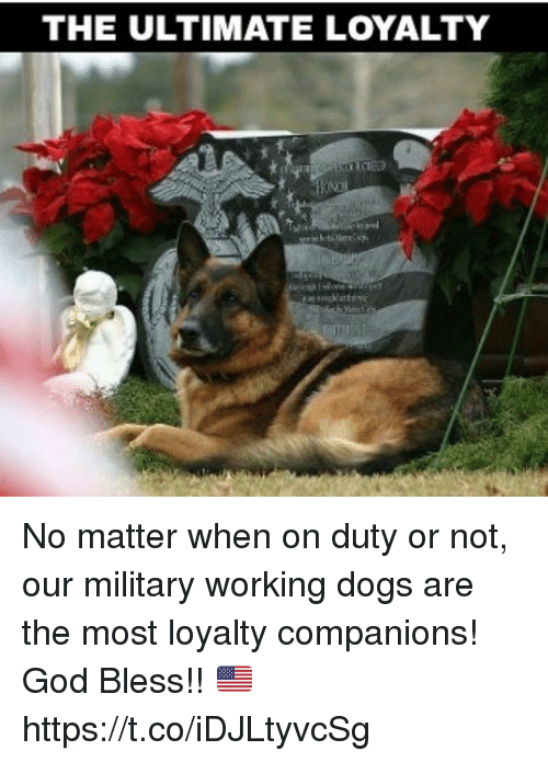 Dogs, God, and Memes: THE ULTIMATE LOYALTY No matter when on duty or not, our military working dogs are the most loyalty companions! God Bless!! 🇺🇸 https://t.co/iDJLtyvcSg