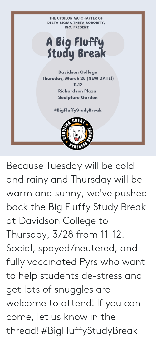 College, Memes, and Break: THE UPSILON MU CHAPTER OF  DELTA SIGMA THETA SORORITY  INC. PRESENT  A Big Fluff  Study Brea  Davidson College  Thursday, March 28 (NEW DATE!)  11-12  Richardson Plaza  Sculpture Garden  #BigFluffyStudyBreak  PYRENE Because Tuesday will be cold and rainy and Thursday will be warm and sunny, we've pushed back the Big Fluffy Study Break at Davidson College to Thursday, 3/28 from 11-12. Social, spayed/neutered, and fully vaccinated Pyrs who want to help students de-stress and get lots of snuggles are welcome to attend! If you can come, let us know in the thread! #BigFluffyStudyBreak