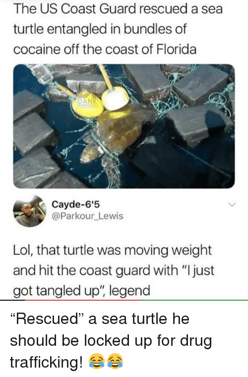 """Funny, Lol, and Cocaine: The US Coast Guard rescued a sea  turtle entangled in bundles of  cocaine off the coast of Florida  DAN  Cayde-6'5  @Parkour_Lewis  Lol, that turtle was moving weight  and hit the coast guard with """"I just  got tangled up"""", legend """"Rescued"""" a sea turtle he should be locked up for drug trafficking! 😂😂"""