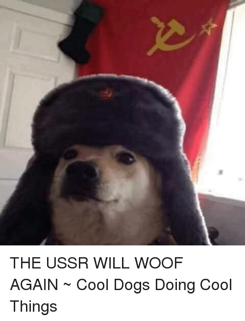 the ussr will woof again ~ cool dogs doing cool 18112764 ✅ 25 best memes about cool dogs cool dogs memes,Dank Memes Dog
