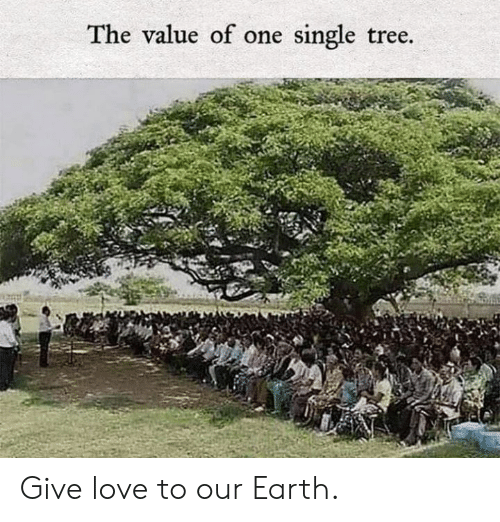 Dank, Love, and Earth: The value of one single tree. Give love to our Earth.