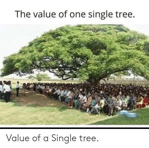 Memes, Tree, and Single: The value of one single tree. Value of a Single tree.