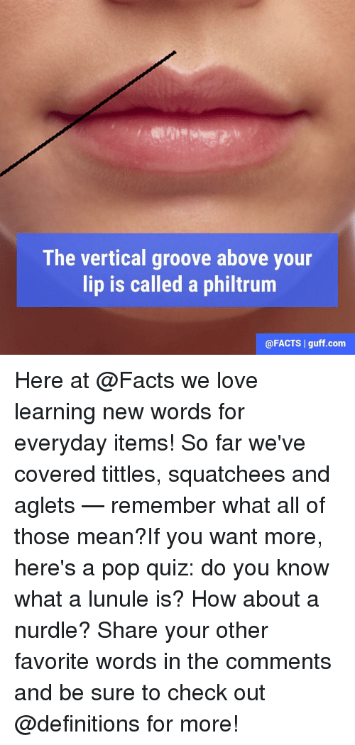 The Vertical Groove Above Your Lip Is Called a Philtrum I