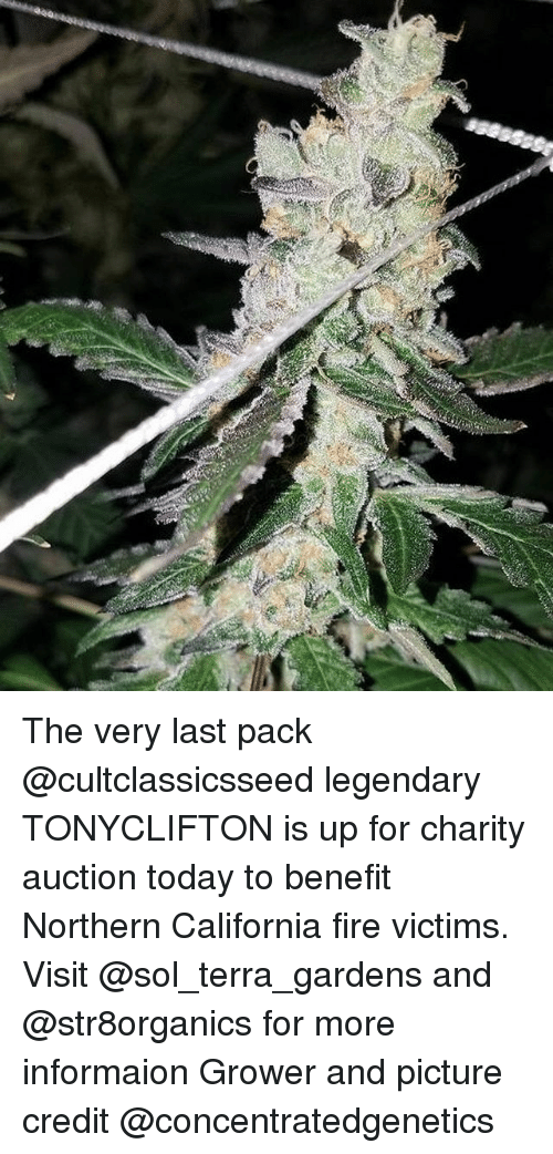 Fire, Weed, and California: The very last pack @cultclassicsseed legendary TONYCLIFTON is up for charity auction today to benefit Northern California fire victims. Visit @sol_terra_gardens and @str8organics for more informaion Grower and picture credit @concentratedgenetics
