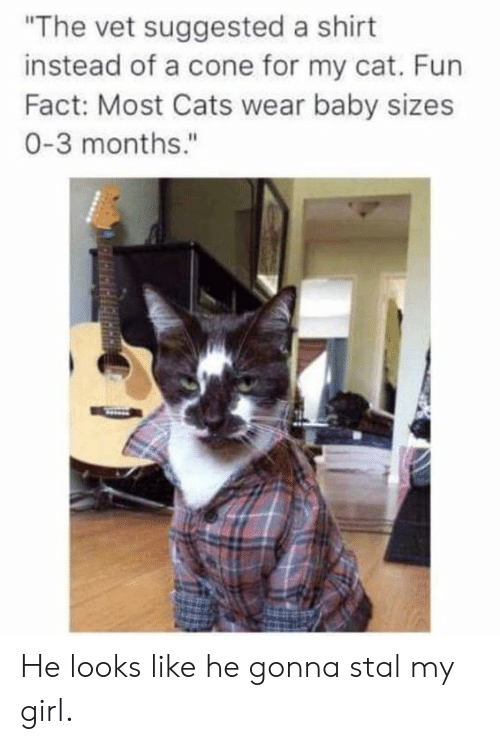 """Cats, Dank, and Girl: """"The vet suggested a shirt  instead of a cone for my cat. Fun  Fact: Most Cats wear baby sizes  0-3 months.""""  AeLeveRIciantn He looks like he gonna stal my girl."""
