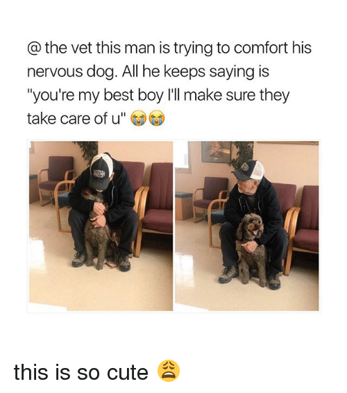 "Cute, Best, and Girl Memes: the vet this man is trying to comfort his  nervous dog. All he keeps saying is  ""you're my best boy I'll make sure they  take care of u this is so cute 😩"