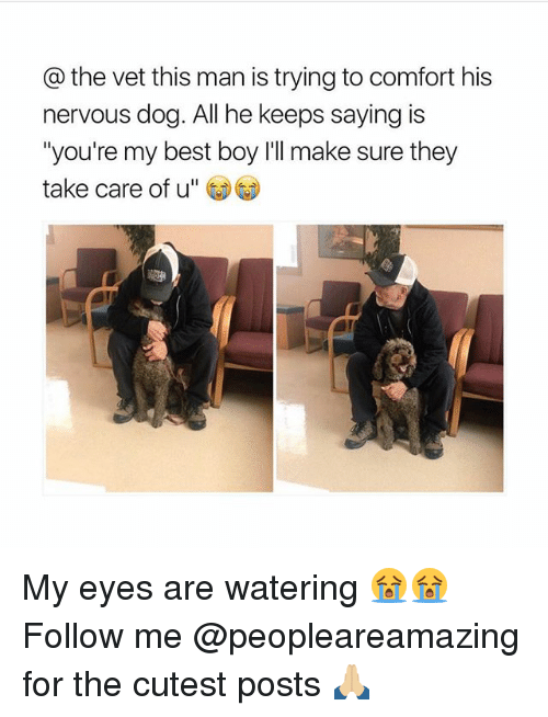 "Memes, Best, and Boy: @the vet this man is trying to comfort his  nervous dog. All he keeps saying is  ""you're my best boy I'll make sure they  take care of u"" My eyes are watering 😭😭 Follow me @peopleareamazing for the cutest posts 🙏🏼"