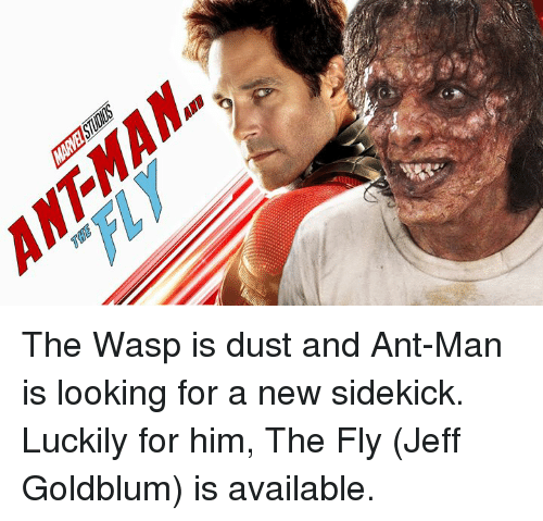 Dank, Jeff Goldblum, and 🤖: The Wasp is dust and Ant-Man is looking for a new sidekick. Luckily for him, The Fly (Jeff Goldblum) is available.