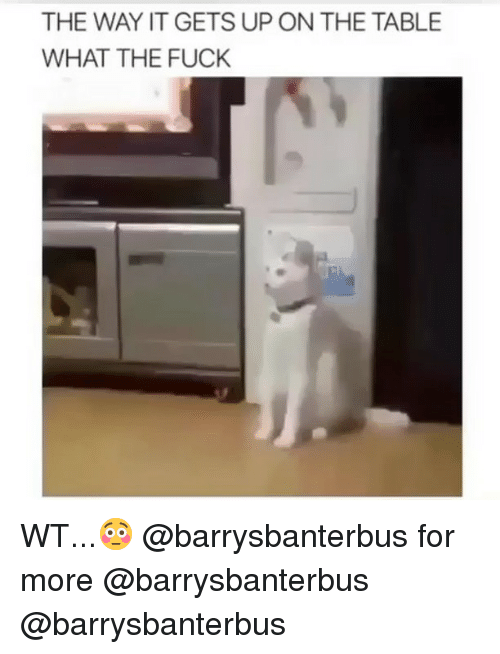 Memes, Fuck, and 🤖: THE WAY IT GETS UP ON THE TABLE  WHAT THE FUCK WT...😳 @barrysbanterbus for more @barrysbanterbus @barrysbanterbus