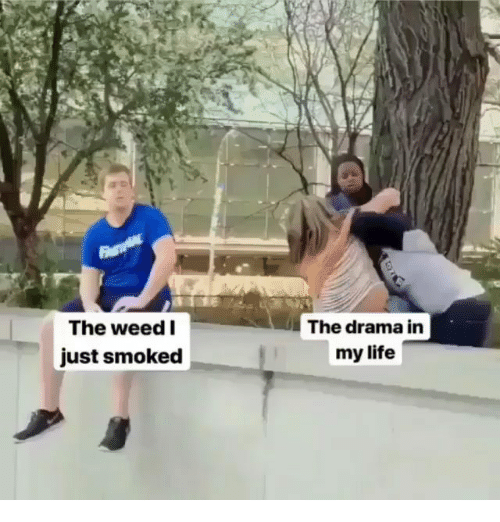 Life, Memes, and Weed: The weed I  The drama in  just smoked  my life
